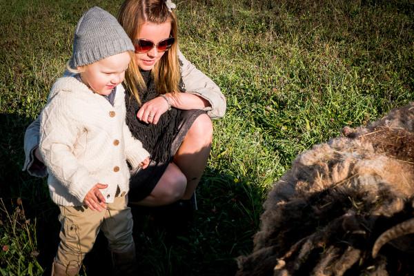 owce wrzosówki-16