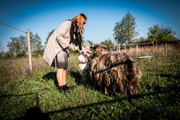 owce wrzosówki-4