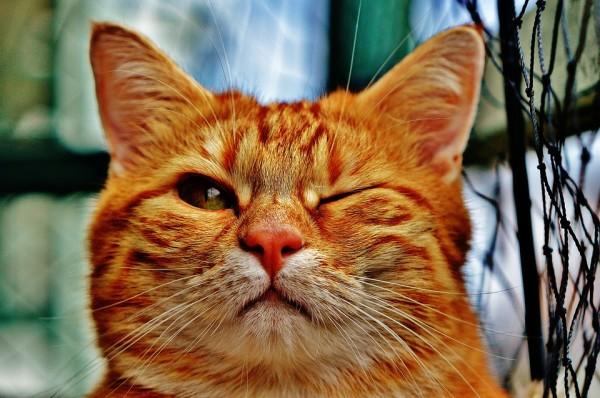 cat-1333926_960_720